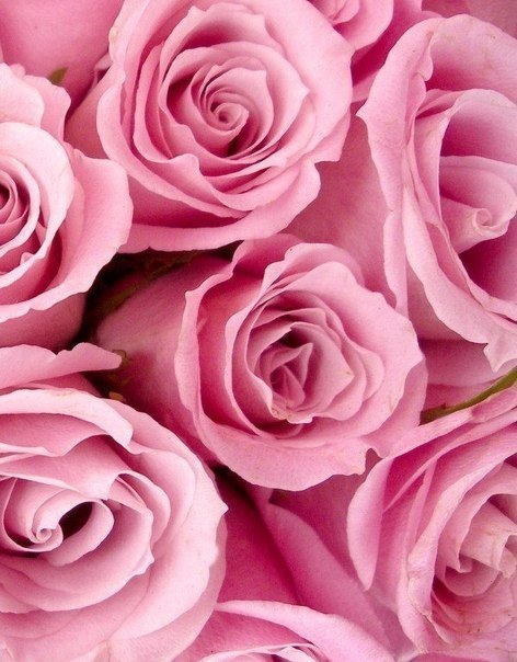 Красивые розовые картинки на заставку и обои - подборка 5