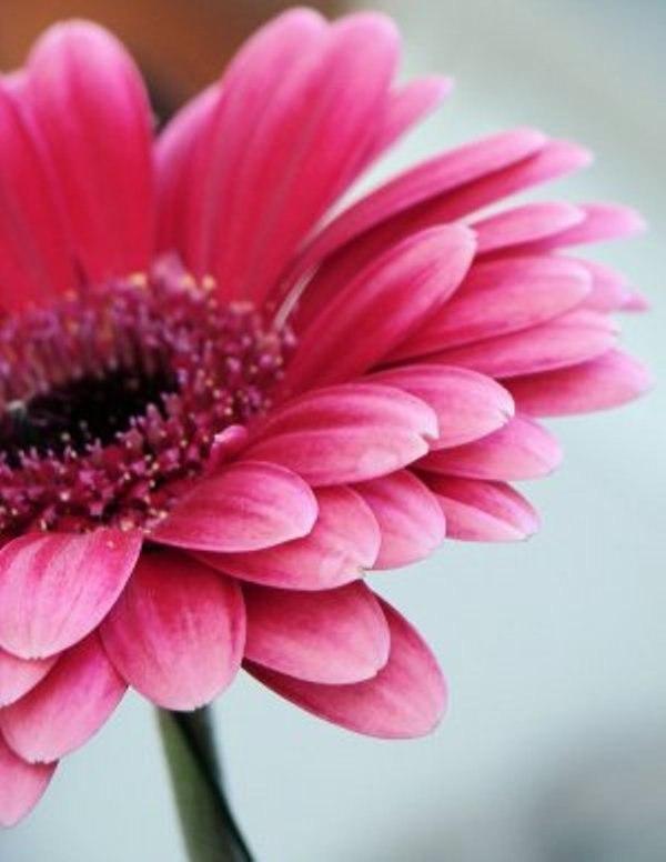 Красивые розовые картинки на заставку и обои - подборка 6