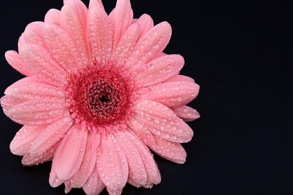 Красивые розовые картинки на заставку и обои - подборка 7