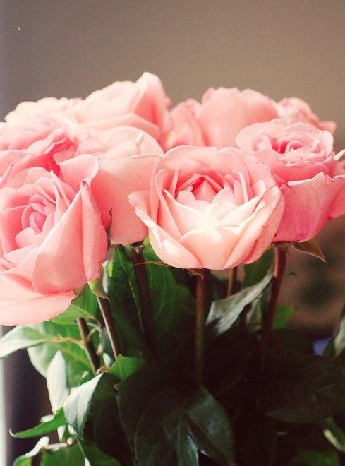 Красивые розовые картинки на заставку и обои - подборка 8