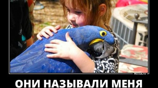 Лучшие смешные демотиваторы недели за октябрь 2018 - сборка 12