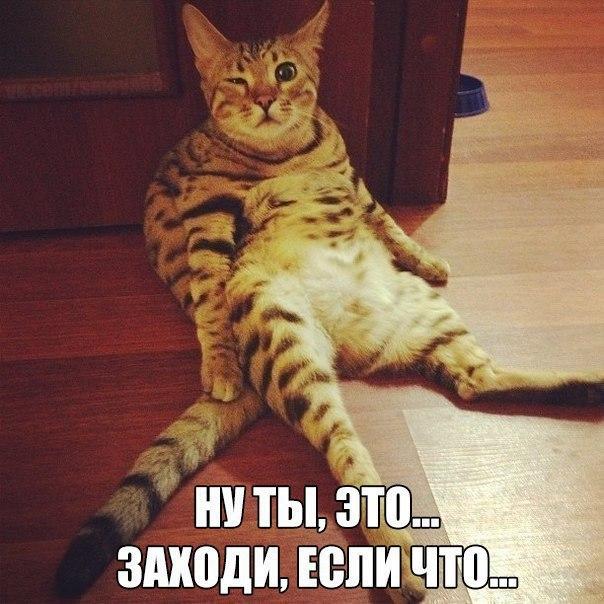Лучшие смешные и веселые картинки, фото с текстом - сборка №99 6