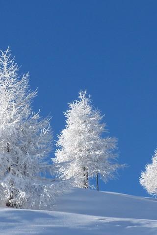 Обои и картинки про зиму на заставку телефона - самые красивые 11