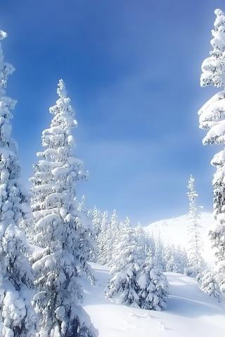 Обои и картинки про зиму на заставку телефона - самые красивые 3