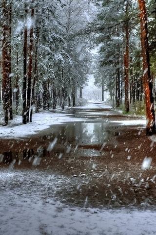 Обои и картинки про зиму на заставку телефона - самые красивые 4