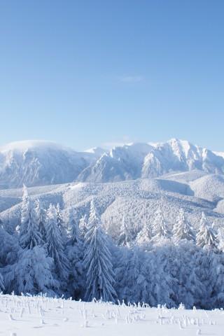 Обои и картинки про зиму на заставку телефона - самые красивые 5