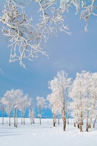 Обои и картинки про зиму на заставку телефона - самые красивые 7