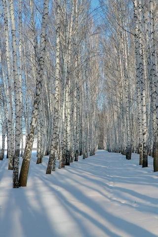 Обои и картинки про зиму на заставку телефона - самые красивые 8