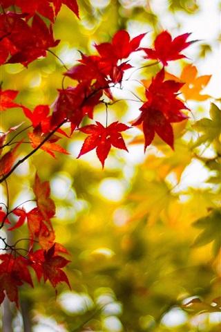 Осенние листья картинки на телефон - самые красивые и прикольные 1