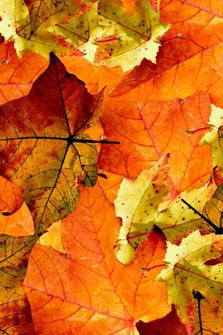 Осенние листья картинки на телефон - самые красивые и прикольные 10