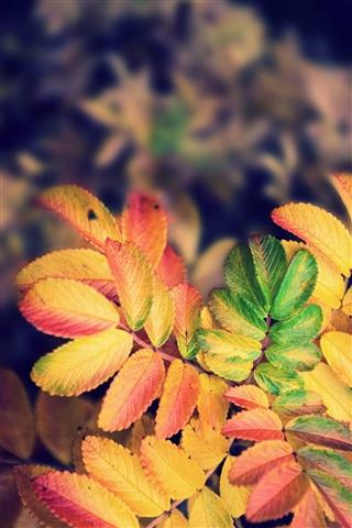 Осенние листья картинки на телефон - самые красивые и прикольные 11