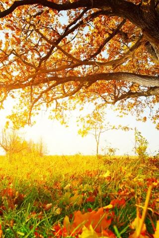Осенние листья картинки на телефон - самые красивые и прикольные 14