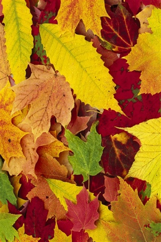 Осенние листья картинки на телефон - самые красивые и прикольные 15
