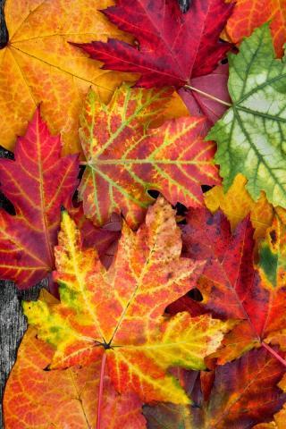Осенние листья картинки на телефон - самые красивые и прикольные 16