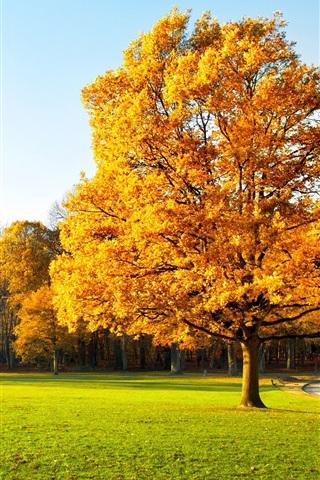 Осенние листья картинки на телефон - самые красивые и прикольные 2