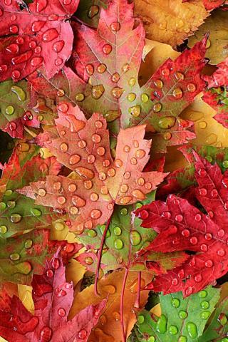 Осенние листья картинки на телефон - самые красивые и прикольные 3