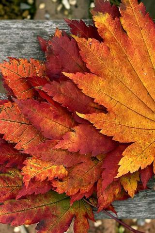 Осенние листья картинки на телефон - самые красивые и прикольные 6