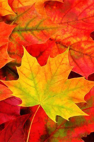 Осенние листья картинки на телефон - самые красивые и прикольные 7