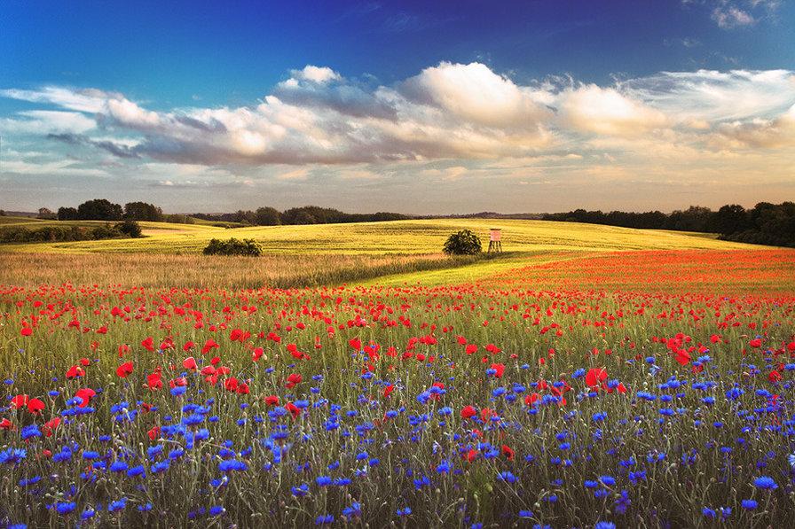 Поле цветов картинки и фотографии - самые красивые и удивительные 11