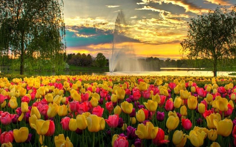 Поле цветов картинки и фотографии - самые красивые и удивительные 13