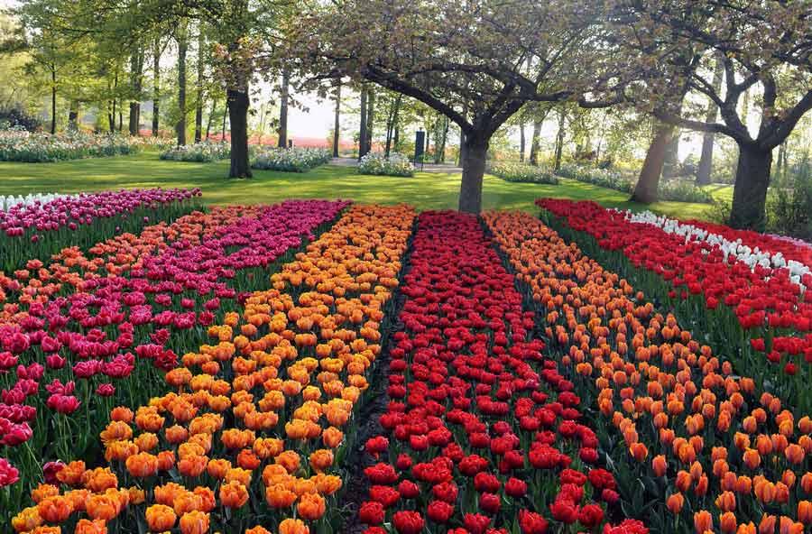 Поле цветов картинки и фотографии - самые красивые и удивительные 2