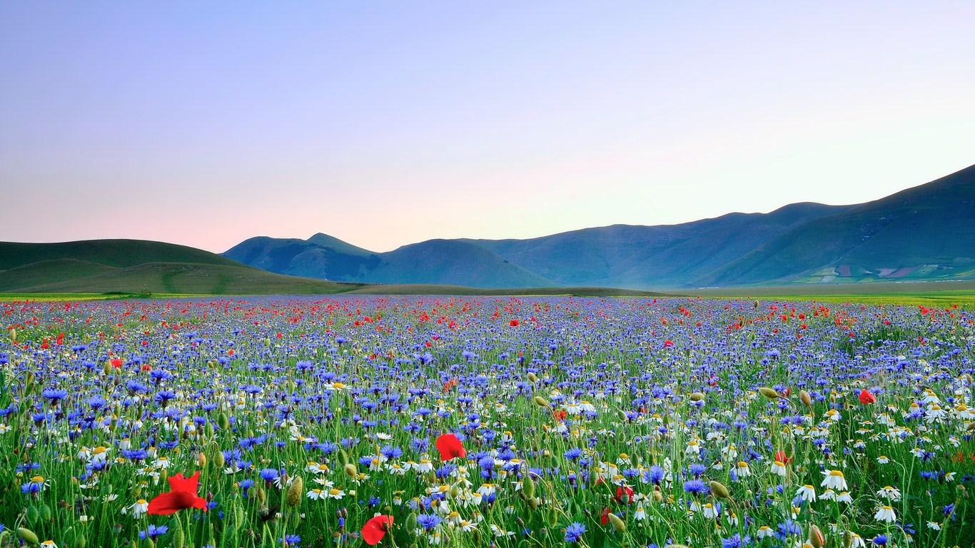 Картинки цветов и полей