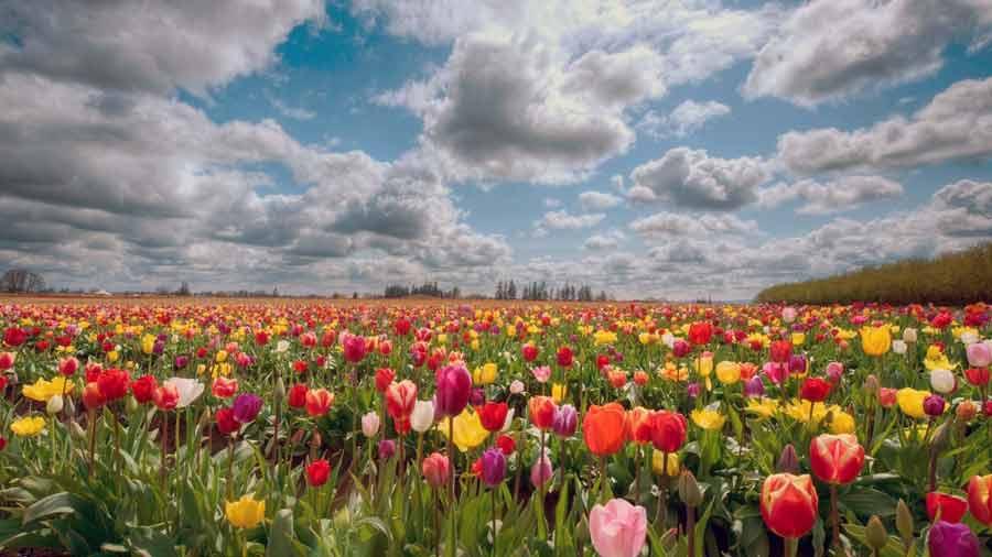 Поле цветов картинки и фотографии - самые красивые и удивительные 6