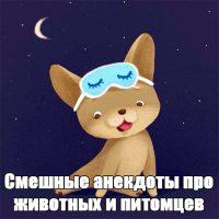 Смешные анекдоты про животных и питомцев до слез - подборка №128 заставка