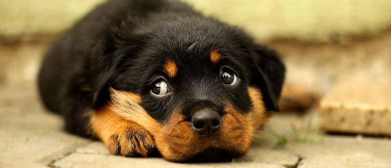 Щенки и собаки с красивыми глазами - удивительные фотографии 11