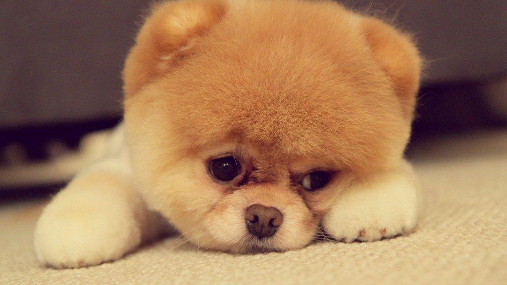 Щенки и собаки с красивыми глазами - удивительные фотографии 2