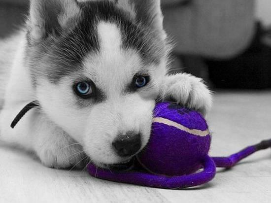 Щенки и собаки с красивыми глазами - удивительные фотографии 3