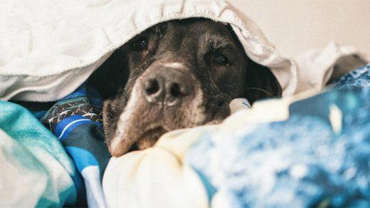 Инсулинома у собак - симптомы, диагностика, лечение и прогноз 1
