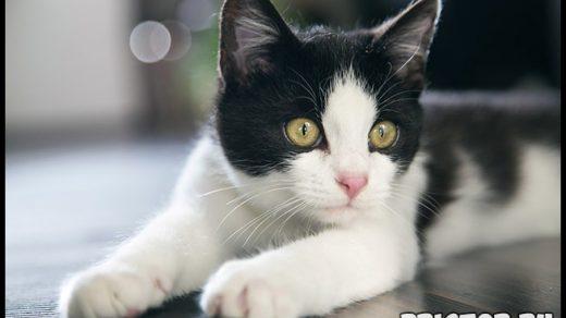 Как отучить кота гадить где попало Причины и способы решения проблемы 3