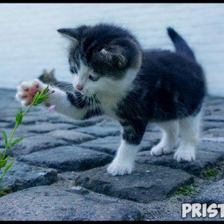 Как успокоить маленького и активного котенка - основные советы 3