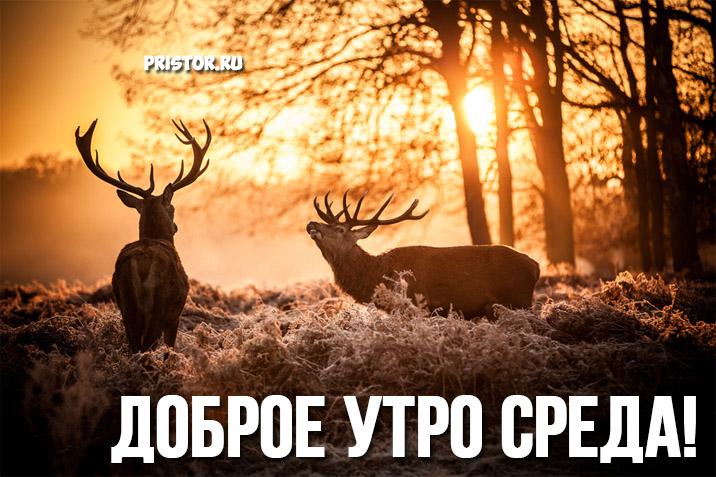 Картинки Доброе утро среда - самые прикольные и милые открытки 11