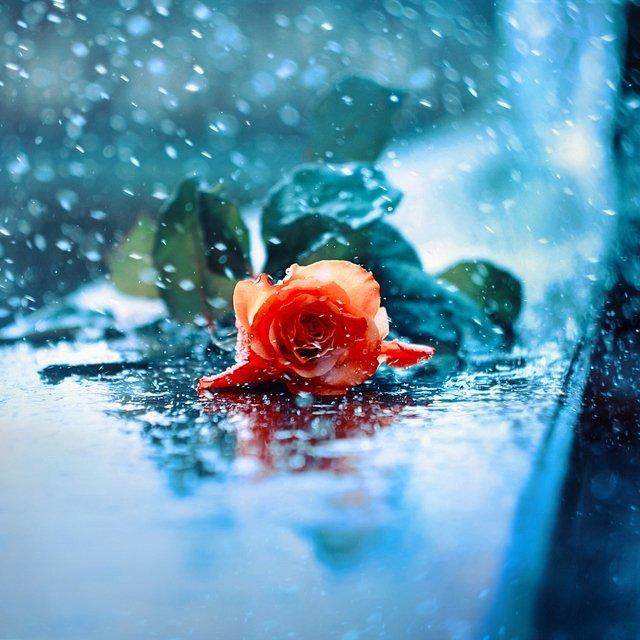 Картинки и фотки на аву розы красивые - подборка аватарок 1
