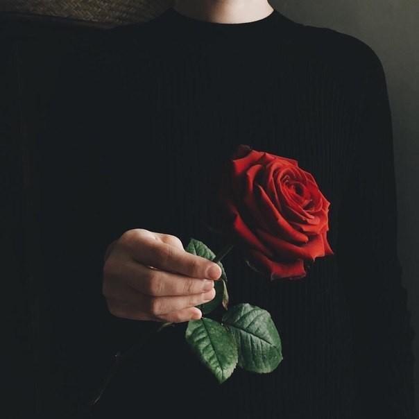 Картинки и фотки на аву розы красивые - подборка аватарок 3