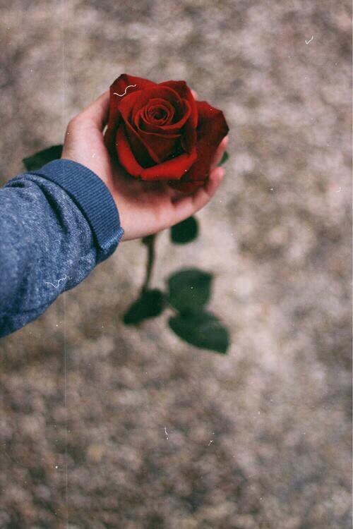 Открытка, картинки с розой в руке на аву