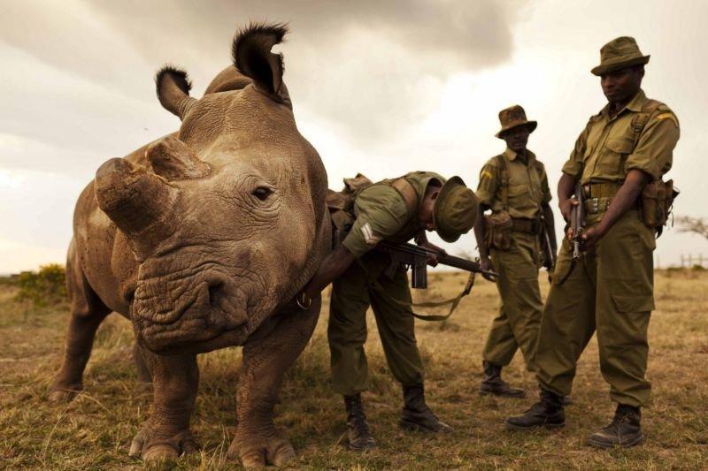 Красивые и прикольные картинки белого носорога - подборка 13