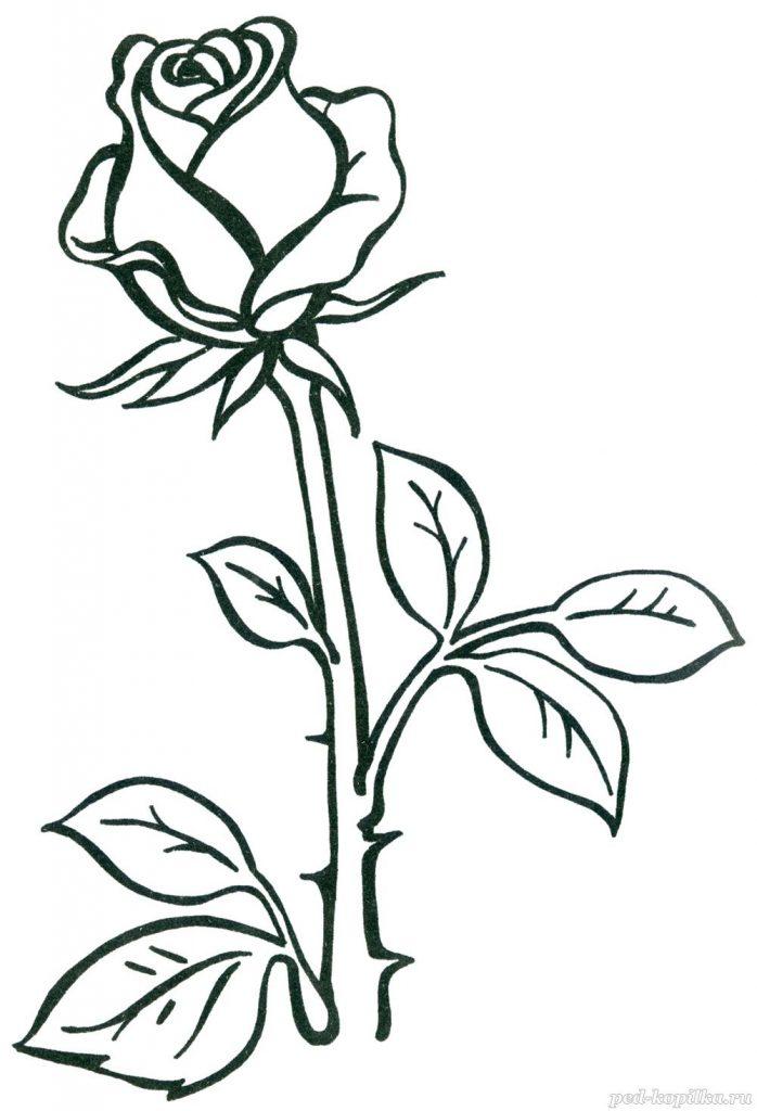 Красивые картинки и рисунки розы для детей - прикольная подборка 12