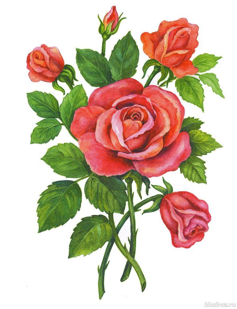 Красивые картинки и рисунки розы для детей - прикольная подборка 8