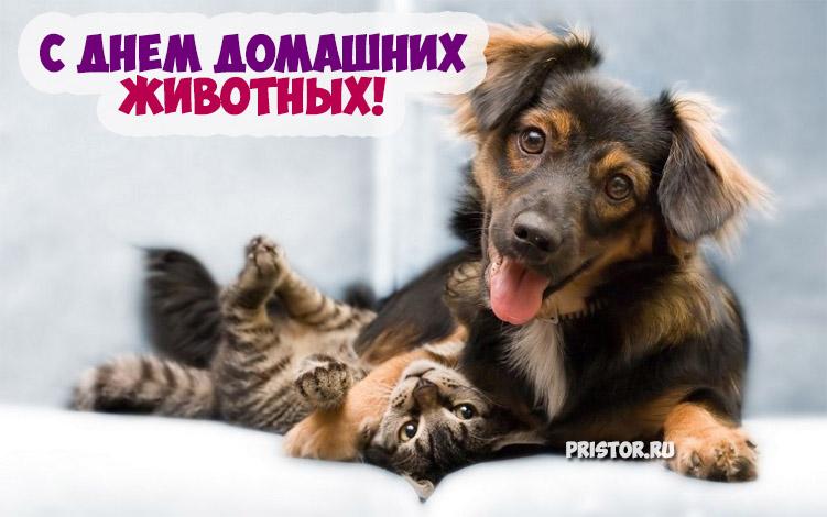Красивые картинки с Днем Домашних Животных - подборка 1