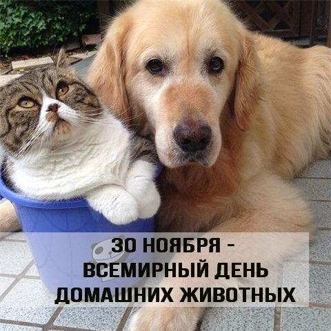 Красивые картинки с Днем Домашних Животных - подборка 7