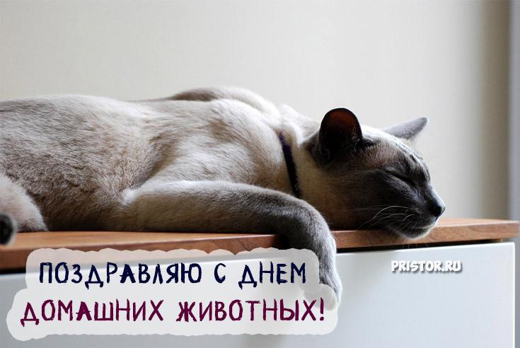 Красивые картинки с Днем Домашних Животных - подборка 8