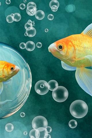 Красивые обои рыбки для заставки вашего телефона - подборка 1