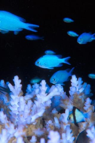 Красивые обои рыбки для заставки вашего телефона - подборка 16