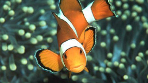 Красивые обои рыбки для заставки вашего телефона - подборка 18