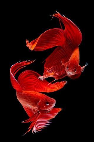Красивые обои рыбки для заставки вашего телефона - подборка 5
