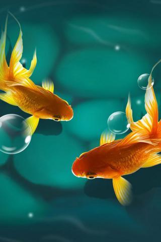 Красивые обои рыбки для заставки вашего телефона - подборка 6
