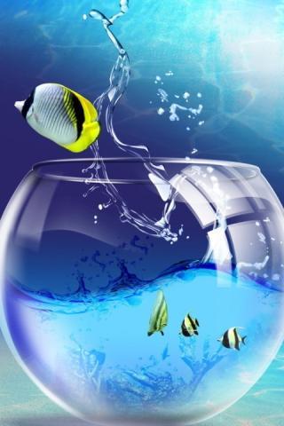 Красивые обои рыбки для заставки вашего телефона - подборка 7
